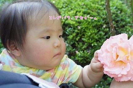 嵐丸 2014.5.22-9