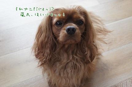 嵐丸 2014.5.28-3