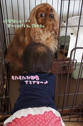 嵐丸 2014.6.10-9