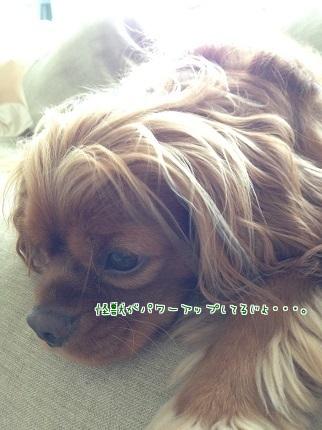 嵐丸 2014.6.23-3