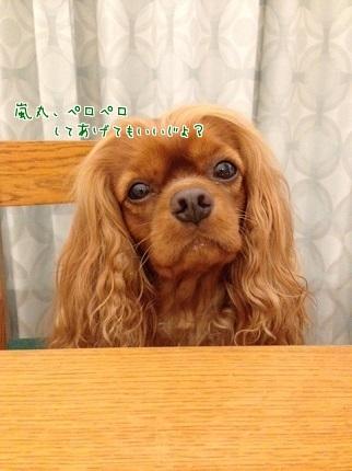 嵐丸 2014.7.17-3