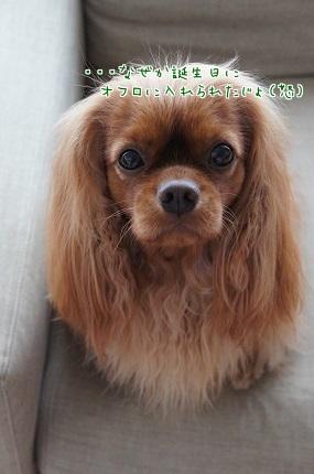 嵐丸 2014.7.24-1