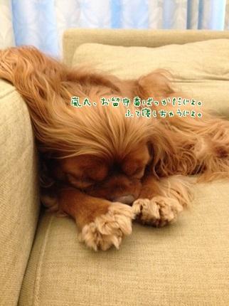 嵐丸 2014.8.6-16
