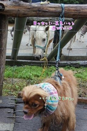 嵐丸 2014.8.19-6