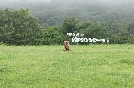 嵐丸 2014.8.22-11