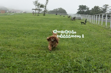 嵐丸 2014.8.22-10