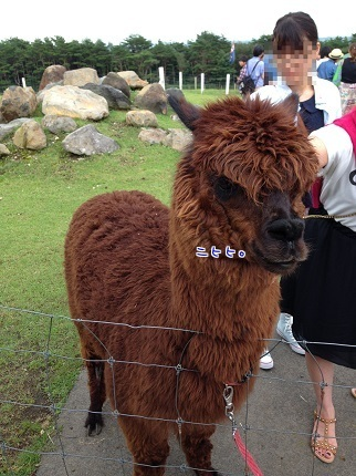 嵐丸 2014.8.27-3