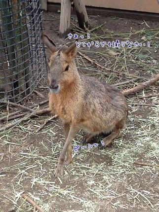 嵐丸 2014.8.27-12