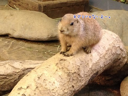 嵐丸 2014.8.27-10