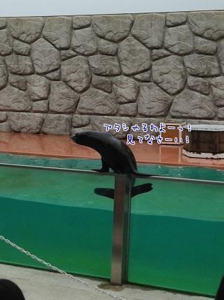 嵐丸 2014.8.27-8