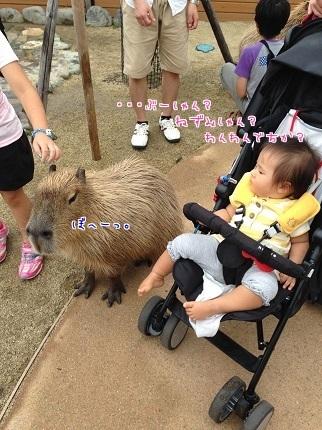 嵐丸 2014.8.27-7