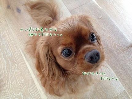 嵐丸 2014.8.29-12