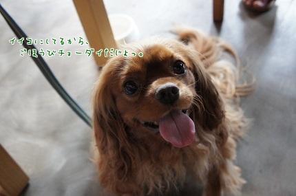 嵐丸 2014.9.9-11