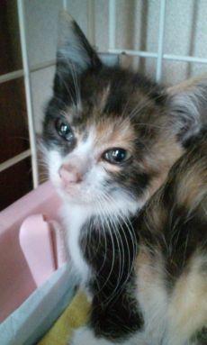親不孝通り子猫 5