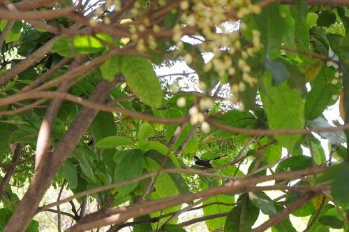 タイの鳥2