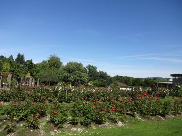 0615Botanic garden