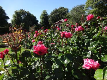 0615Botanic garden2