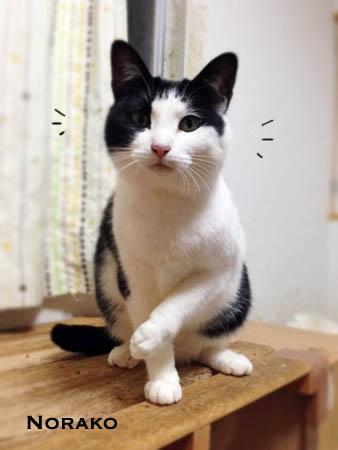のらこ2014.2.25①