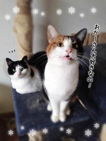 のらここ2014.2.28②