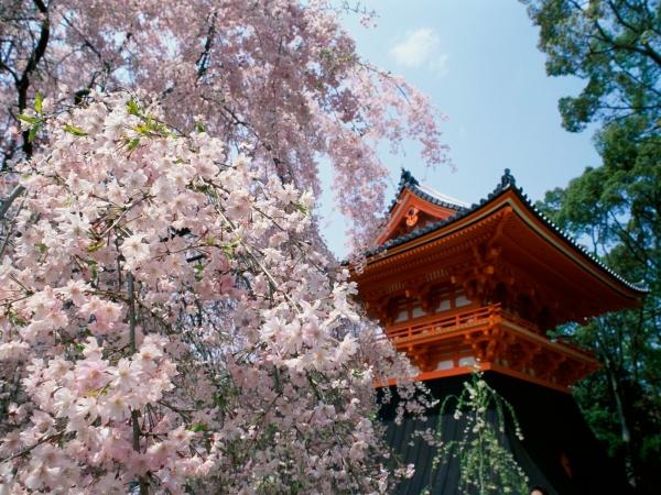 ninnaji_temple_-_kyoto_japan.jpg