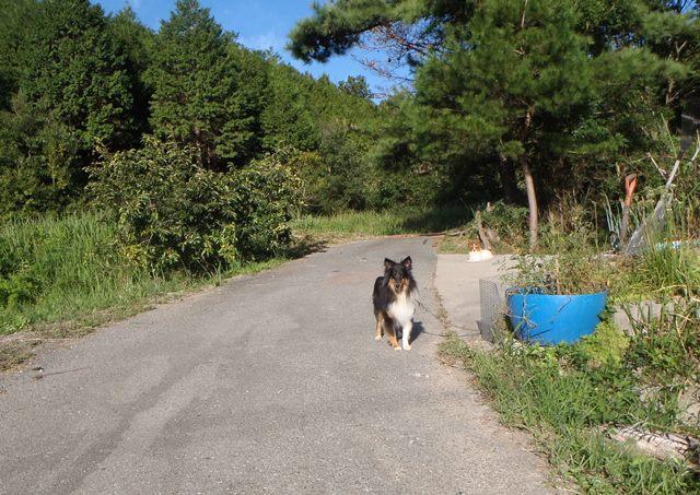 散歩と犬2014914