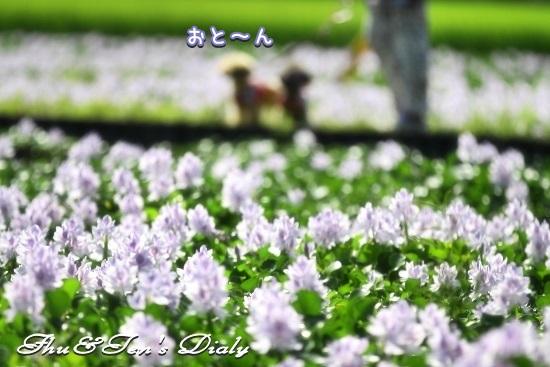 004IMG_9739.jpg