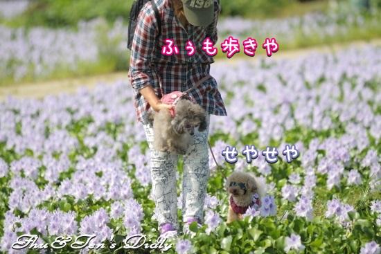 007IMG_9761.jpg