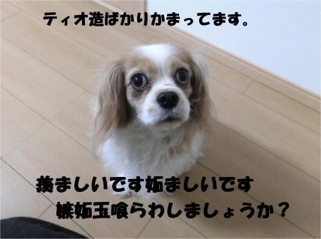 011_convert_20140305180327.jpg
