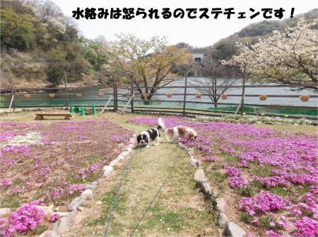 014_convert_20140414170827.jpg