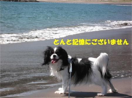 016_convert_20140407091311.jpg