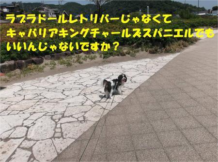 01_convert_20140526173212.jpg