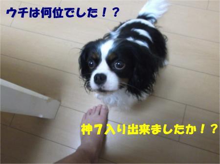 01_convert_20140609182910.jpg