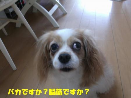 01_convert_20140701181700.jpg