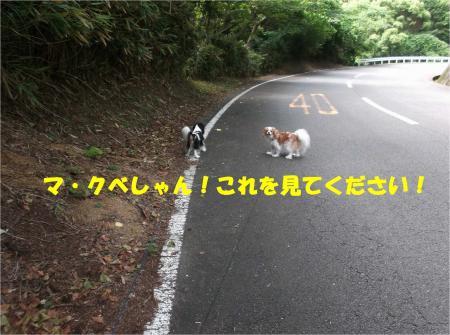 01_convert_20140716181135.jpg