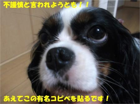 01_convert_20140728171656.jpg
