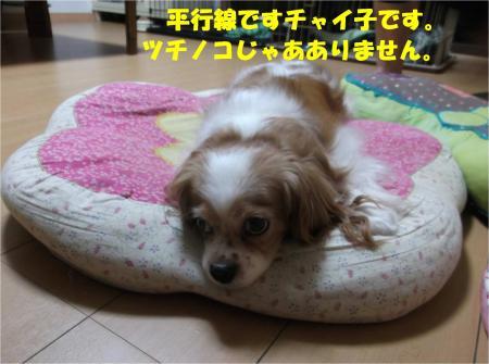 01_convert_20140826172703.jpg