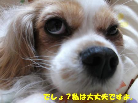 02_convert_20140221184506.jpg