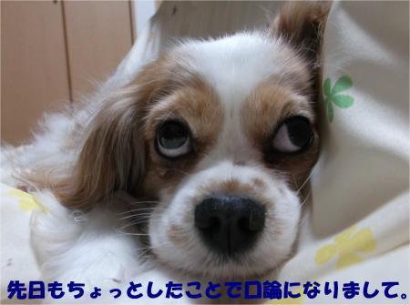 02_convert_20140320184052.jpg