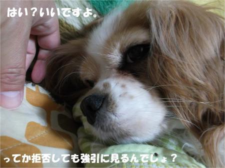 02_convert_20140416174420.jpg