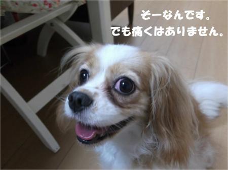 02_convert_20140724181300.jpg
