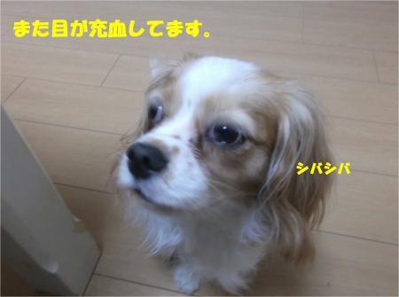 02_convert_20140801173648.jpg