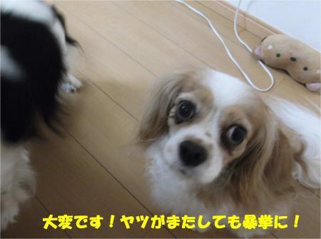 03-1_convert_20140605181447.jpg