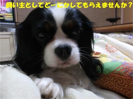 03_convert_20140304172047.jpg