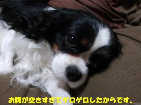 03_convert_20140313172136.jpg