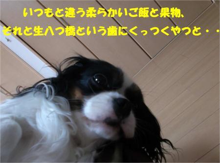 03_convert_20140403175329.jpg