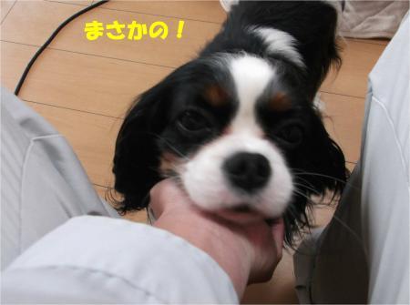 03_convert_20140411181335.jpg
