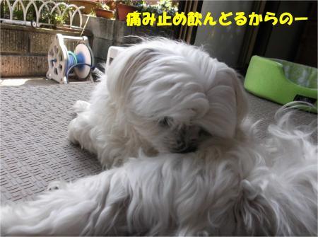 03_convert_20140502184125.jpg