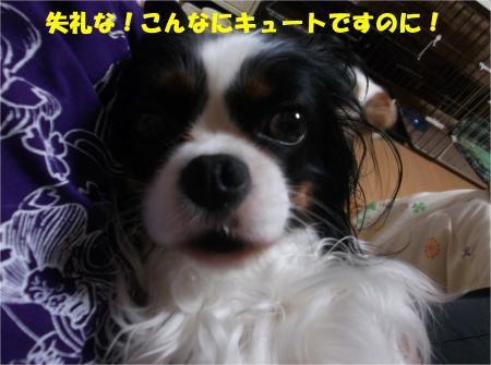 03_convert_20140606190316.jpg