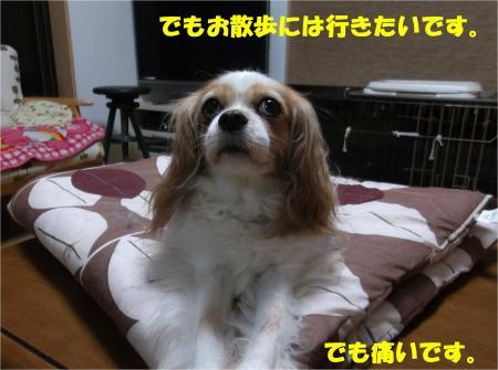 03_convert_20140707181807.jpg