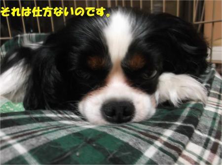 03_convert_20140708172950.jpg